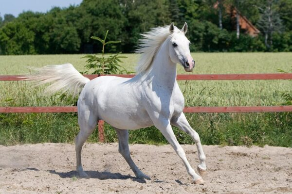 The Circus Mare