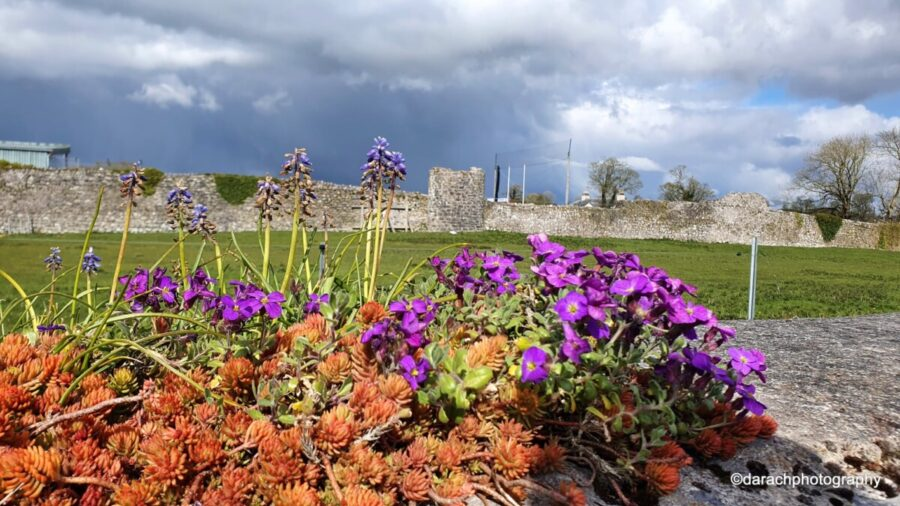The Athenry Town Walls