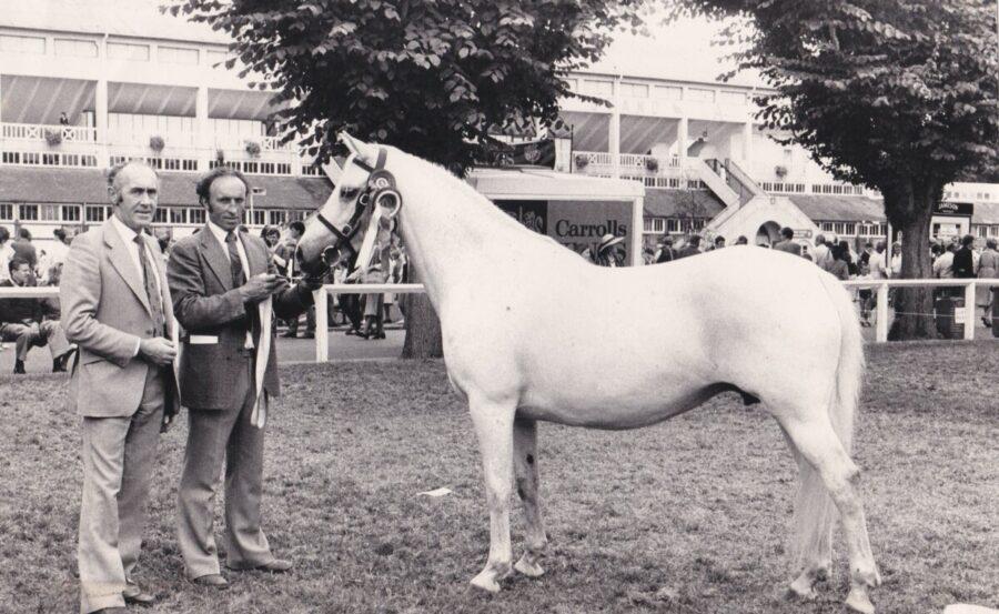 The Connemara Pony